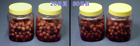 カリカリ梅と梅シロップづくり〜30日目