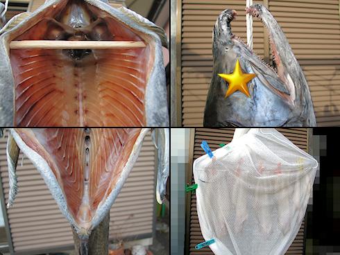 新巻鮭を干す