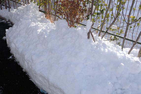 初雪がドカ雪